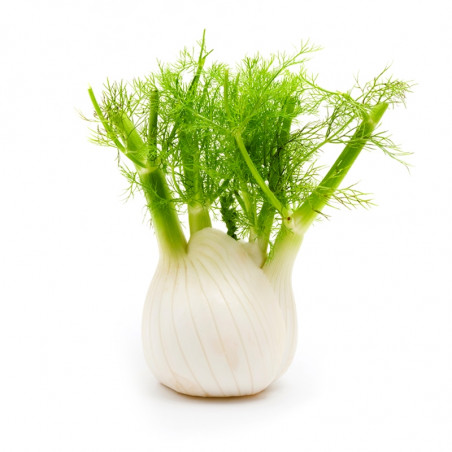 Large Fennel (500g)